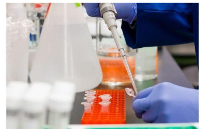 Alemanha aprova testes de candidatas a vacina para a Covid-19