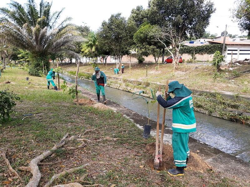 Plantio reforça arborização das margens do igarapé do Passarinho
