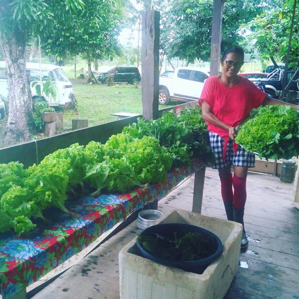 AGRICULTURA FAMILIAR ORGÂNICA  – Produção agrícola ganha espaço no Careiro Castanho