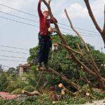 Bombeiros do AM contam com equipe especializada para remoção de árvores